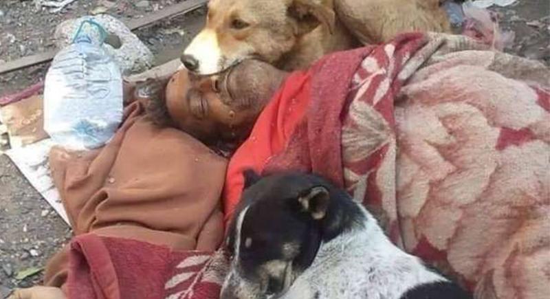 الوفاء في صورة.. الكلاب تحتضن جثة الرجل الذي كان يطعمها