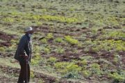 استعدادا للموسم الجديد.. وزارة أخنوش تخصص 1.6 مليون قنطار من البذور للفلاحين