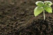 بعد تصريح أخنوش.. فلاحون يترقبون انخفاض أسعار البذور والأسمدة