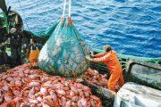 المجلس الحكومي يصادق على مرسوم جديد لحماية الثروة السمكية بالمغرب
