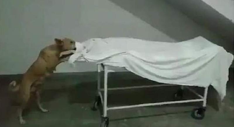 فيديو صادم.. كلب ضال يأكل جثة فتاة في مشرحة المستشفى