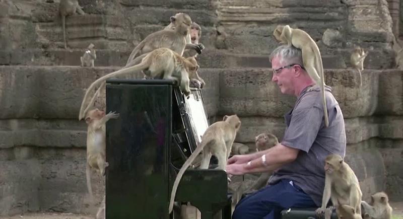 شاهد رد فعل القردة لدى سماعها موسيقى كلاسيكية (فيديو)