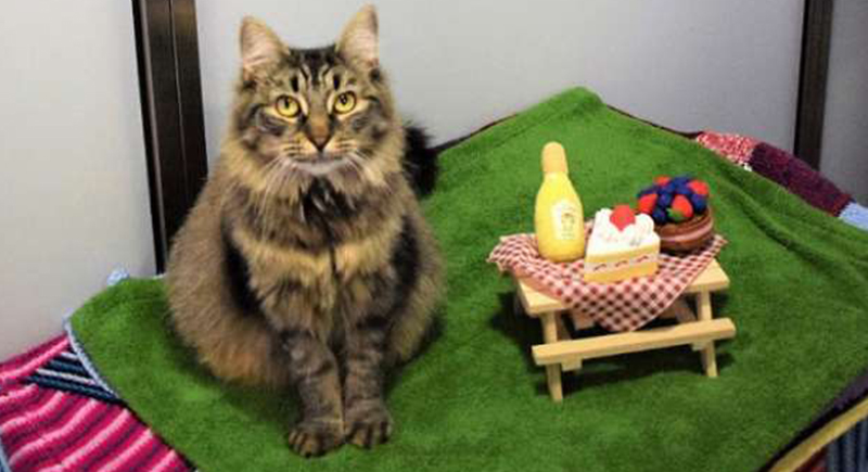 حفل عيد ميلاد 'قطة' يتسبب في إصابة 15 شخصا بفيروس كورونا