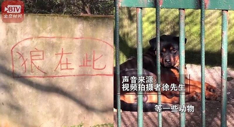 أغرب خدعة قامت بها حديقة حيوان صينية بكلب أليف
