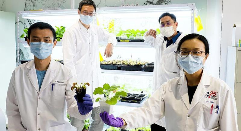 سنغافورة: باحثون يعملون على التواصل مع النباتات عن بعد!