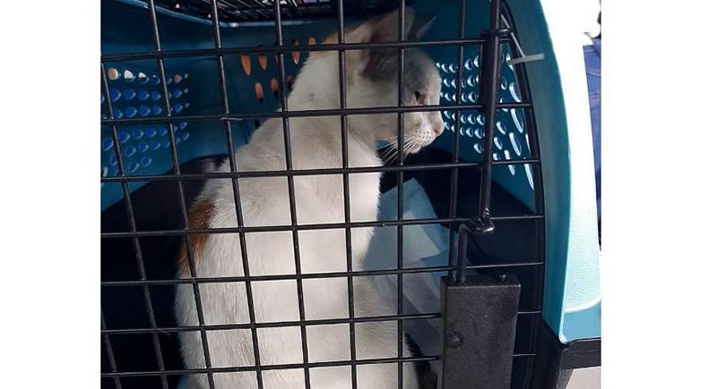 القبض على قط يهرب المخدرات إلى المساجين