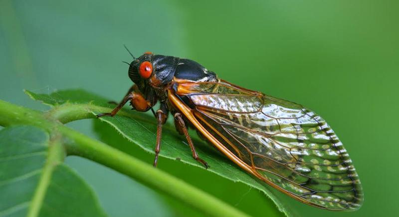 حشرات الزيز القاتلة تعاود الظهور مجددا.. مليارات تستعد للهجوم على الأرض
