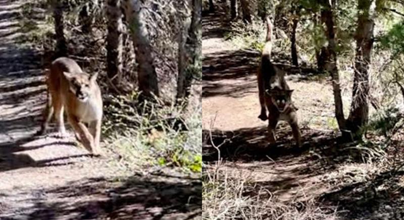 لحظات مرعبة.. شاب ينجو من حيوان مفترس بأعجوبة (فيديو)