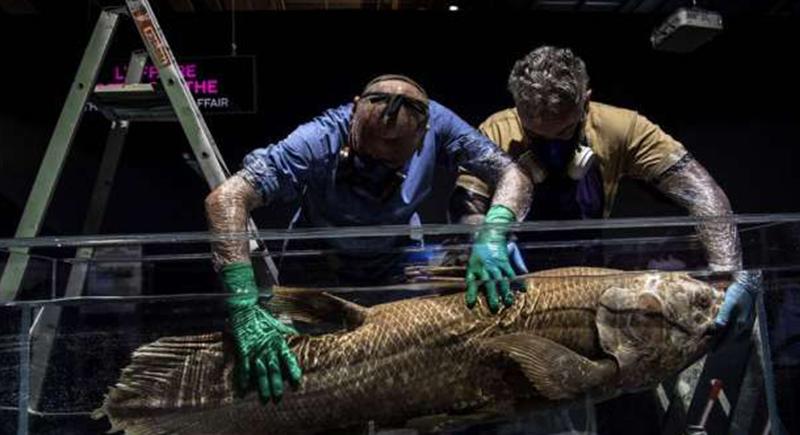 العثور على سمكة عمرها 420 مليون سنة: حية وبصحة جيدة