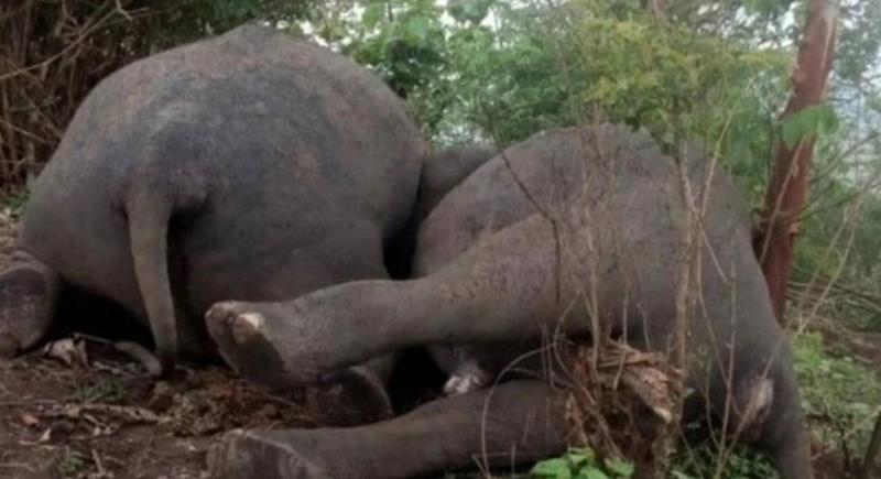 صاعقة برق تقتل 18 فيلا في ثوان