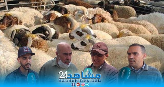 بالفيديو.. مغاربة عن عيد الأضحى: