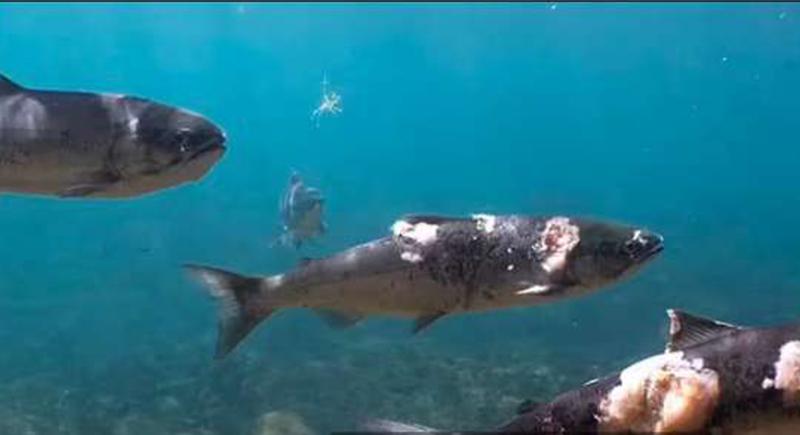 فيديو صادم لأسماك تحترق في مياه المحيط الهادي.. كارثة تحدث لأول مرة