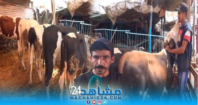 بالفيديو.. عيد الأضحى.. شاهد أسعار البقر بسوق الهراويين بالبيضاء