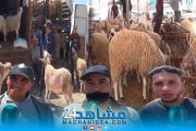 بالفيديو.. أسعار أضحية العيد تغضب المغاربة: