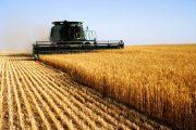 وزارة الفلاحة: محصول الحبوب للموسم الحالي جيد جدا