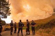 شفشاون: السيطرة على حريق غابة