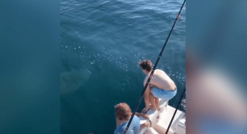 مشهد مرعب.. شابان يقفزان فوق سمكة قرش (فيديو)