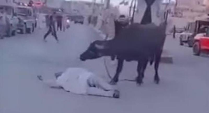 جاموس هائج ينتقم من المارة بوحشية في أحد شوارع العراق (فيديو)